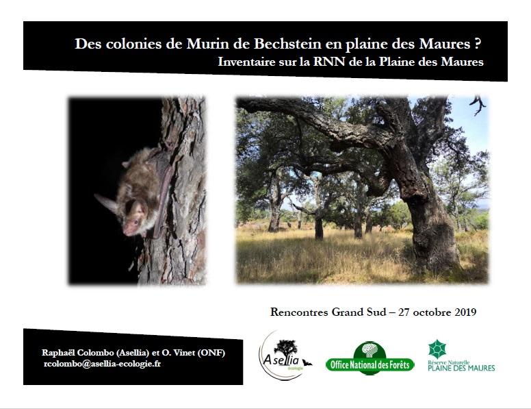 Bechstein_RNN_Maures